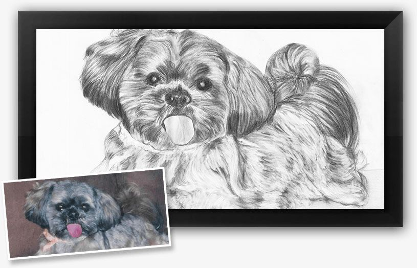 This is a charcoal pet portrait